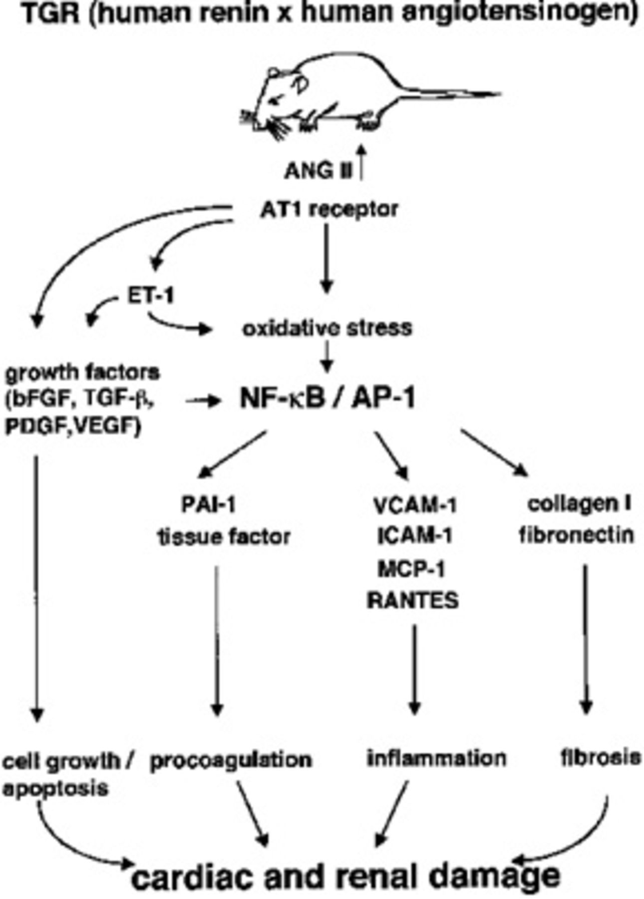Concept Map Renin Angiotensin Aldosterone Mechanism.Intracardiac And Intrarenal Renin Angiotensin Systems Journal Of