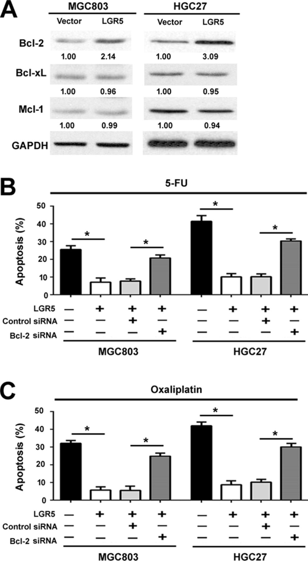 RBP2 depletion inhibits growth and tumorigenesis of lung